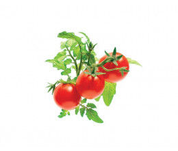 Recharge triple de Mini-Tomates pour Smart Garden - Click and Grow