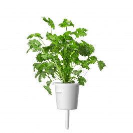 Recharge triple de Coriandre pour jardin d'intérieur Smart Garden 3 - Click and Grow