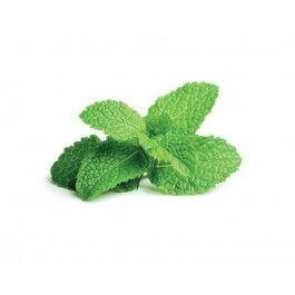 Recharge triple de Menthe poivrée pour jardin d'intérieur Smart Garden 3 - Click and Grow